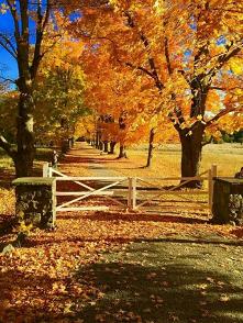 #kolorowa #ciepła #jesień