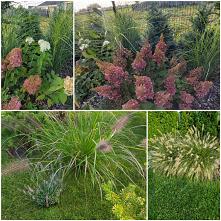 #trawy #ogród