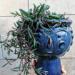 #rośliny #doniczki #ozdoba