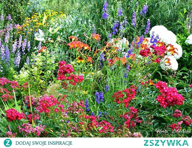 Jeśli podoba Ci się ta 'mini' dawka ogrodowych inspiracji zapraszam Cię do sledzenia mojego profilu na Instagramie i Facebooku (Horti Advisor). Zapewniam dobrą zabawe pełną ogrodniczej pasji i miłości do roślin. Do zobaczenia! Liczę na Ciebie!!!!  The summer's garden. I love it.  And you❓ Let me know in comments⬇️