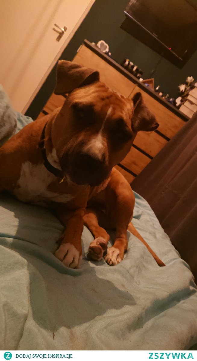 #mylove ❤️ #dog