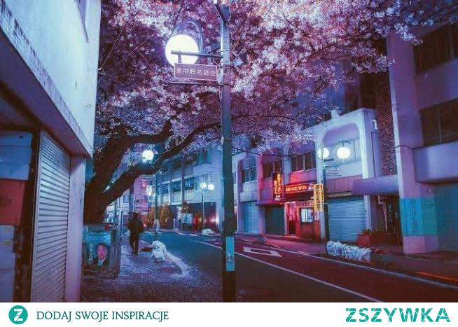 Japonia #japonia #wiśnia