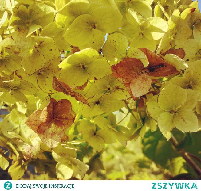 #kwiat#kwiatuszki#