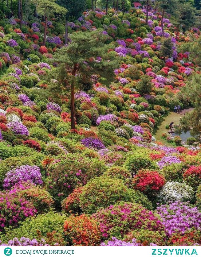 #flowers #places
