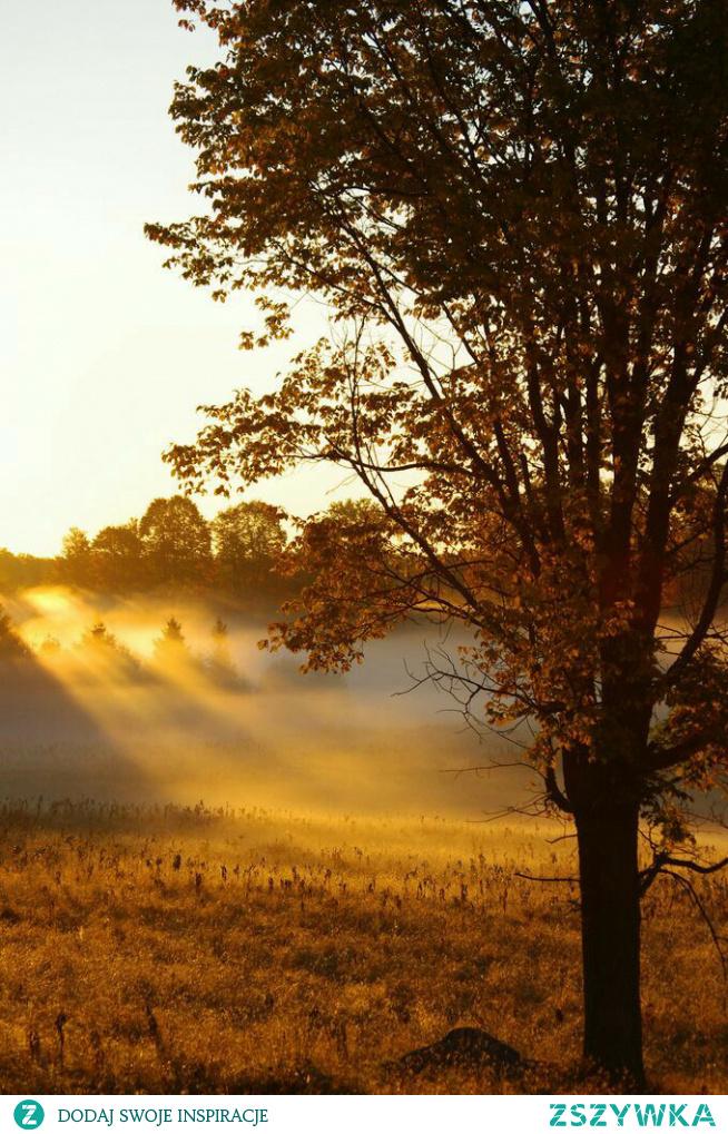 #morning #autumn