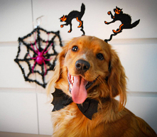 #halloween #cute #dog  ig: @rogerandrussell