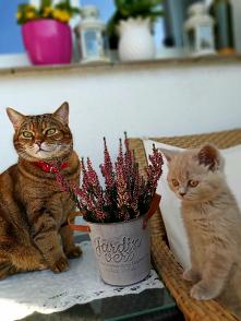 #Koty rządzą na balkonie#jesień