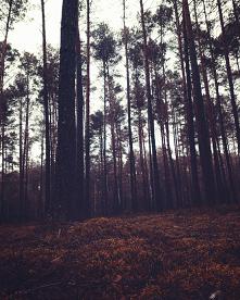 #las#las#drzewa#