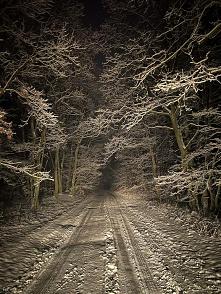 Zimowy las nocą, albo  nocn...