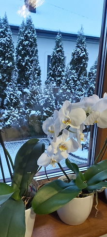 #zima #ogród #rośliny