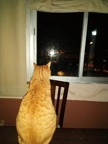 Oglądając fajerwerki