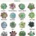 Eszeweria to wdzięczna roślina z rodziny gruboszowatych, która zachwyca bogactwem form i barw. Dzięki takiej różnorodności rośliny te z powodzeniem wykorzystywane są do tworzenia barwnych nasadzeń w donicach...Chcesz dowiedzieć się więcej? Odwiedź stronę hortiadvisor i konta na mediach społecznościowych.