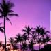 #hawaii #palmy #nice
