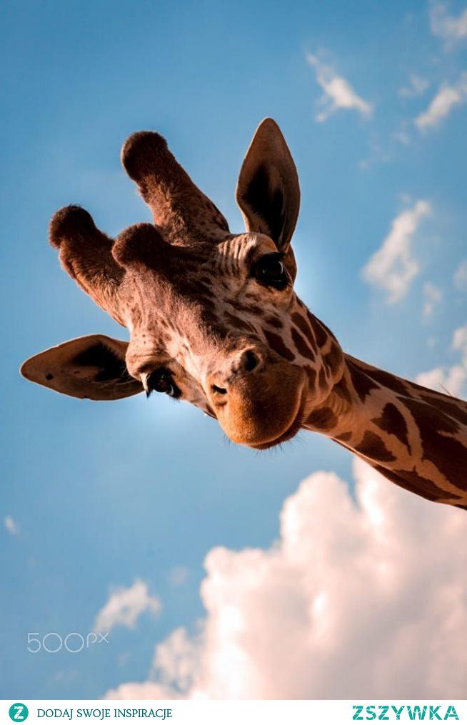 #giraffe #fun