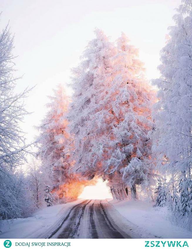 Laponia #zima #śnieg