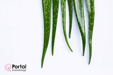 Rośliny lecznicze w choroba...