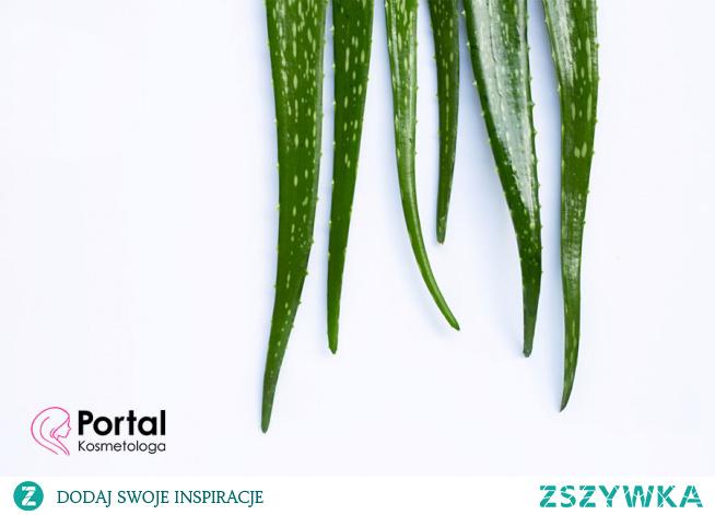 Rośliny lecznicze w chorobach skóry