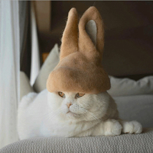#wesoły#kotek#
