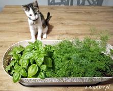 Czas posiać ziołowy ogródek...