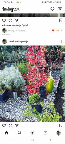 #ogrod #dom #inspiracje zap...