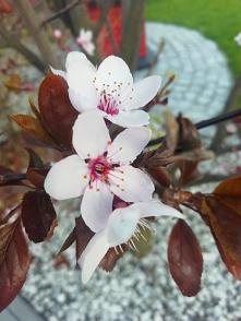 #drzewa#kwiaty#wiosna