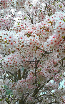 #kwiaty#wiosną#