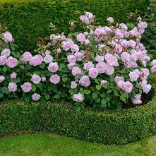 #ogród #garden