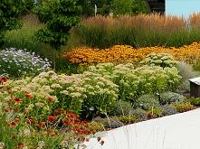 Caloroczny ogrod, projekt