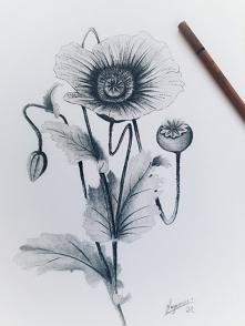 kwiat maku 4B