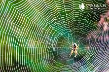 Ugryzienie pająka - czy jes...