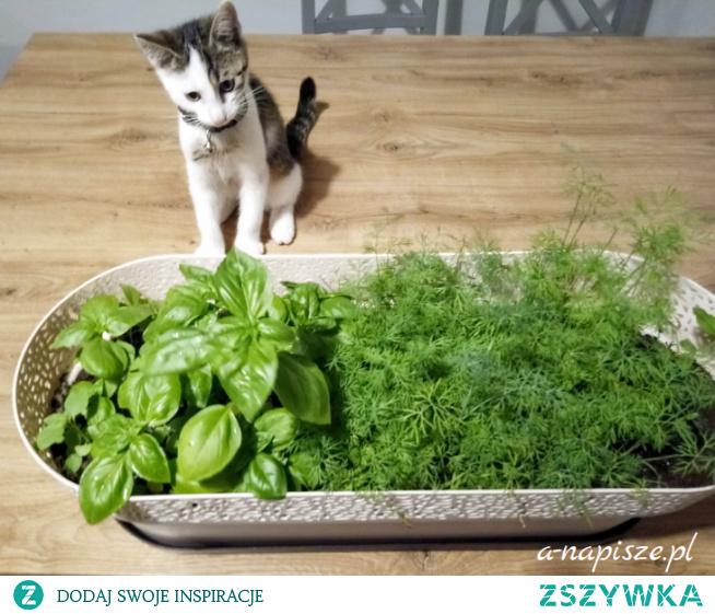 Czas posiać ziołowy ogródek dla kota...