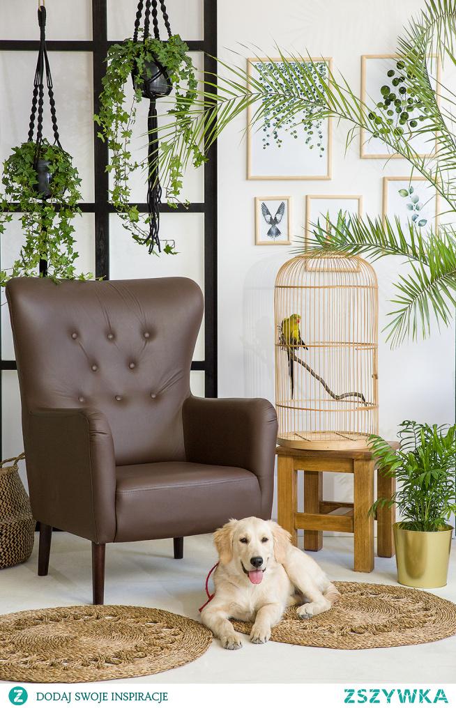 Tapicerowany fotel muszla do salonu, welurowy fotel tulipan. #Dodatki #Meble #Stylizacja #fotel #glamour #Salon #Wystrójwnętrz #Wnętrze #wiosna #kwiaty #tulipan