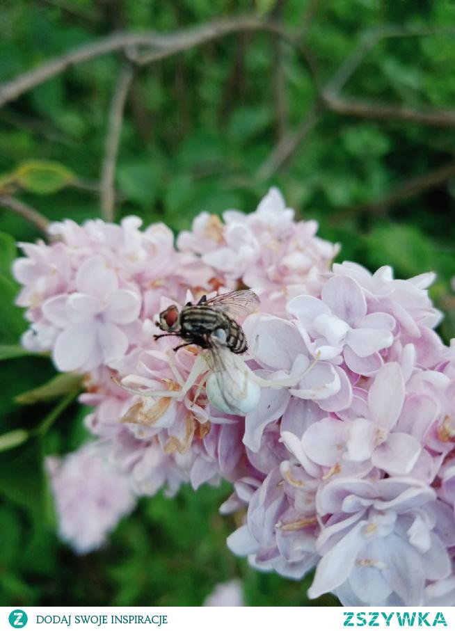 #pająk#mucha#przyroda#