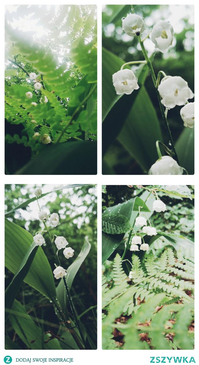 #konwalia#las#biel i zieleń#