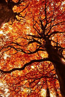 Ahh te kolory..#fotografie#jesień