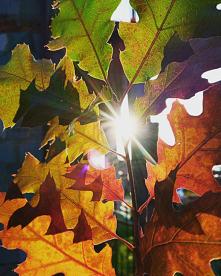 #jesień#liście#słońce#