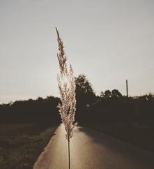 #droga#las#słońce#