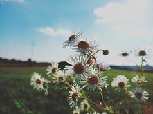 #kwiatki#słońce#zdjęcje#