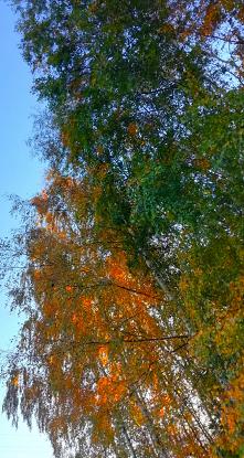Lato tuż obok jesieni