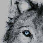 Okładka I <3 wolves...