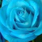 Okładka róże ^^