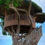 Okładka Domki na drzewie :)