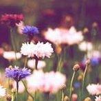 Okładka Flower