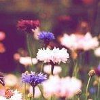 Okładka Kwiaty