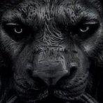 Okładka Black