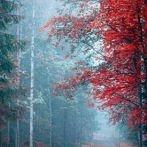 Okładka Jesień