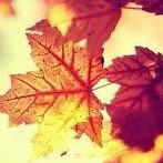 Okładka Jesienny liść