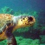 Okładka żółwie