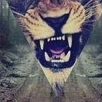 Okładka Tigers