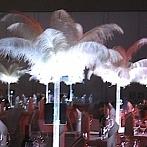 Okładka dekoracje z piór, pióra strusie na eventy, wesela